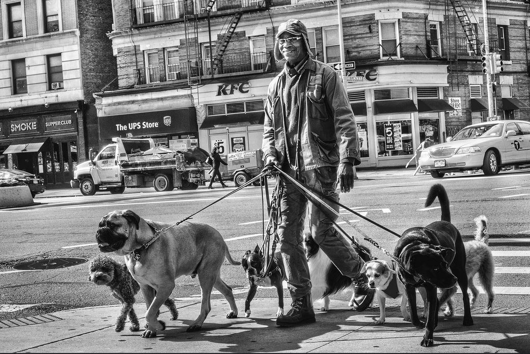 Dogwalker in New York